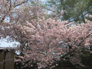 Spring 21